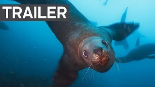 Download Blue Planet II Official Trailer 2 - BBC Earth Video