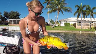 Download Freshwater Lake Fishing for Peacock Bass - Part 1 Video