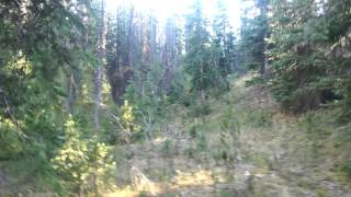 Download Grizzly Bear Encounter in Wyoming Video