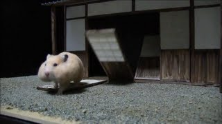 Download ハムスター忍法帖その1~悪徳商人の隠し財産~ Video