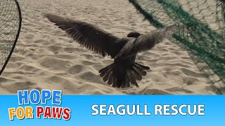 Download Seagull tangled in fishing line and a rubber around his neck is rescued! Video