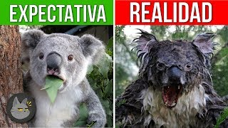 Download 10 ANIMALES QUE SON MÁS PELIGROSOS DE LO QUE PIENSAS Video