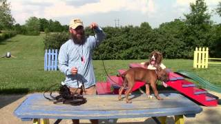 Download Common Sense Puppy Training Part One Video