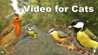 Download Sounds for Cats To Listen To : Forest Birds and Bird Sounds 고양이를위한 비디오 조류 새 Video