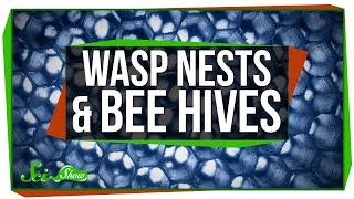 Download Wasp Nests and Bee Hives Video