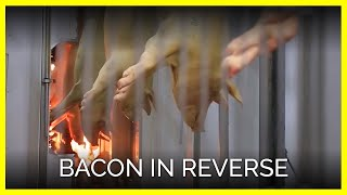 Download Bacon in Reverse Video