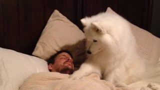 Download Cute dogs waking up owners Video