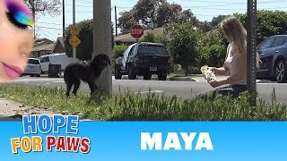 Download Abandoned dog didn't trust us, but then her guardian angel showed up! Video