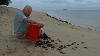 Download Malaysian Green Turtles | Attenborough 60 Years in the Wild | BBC Video