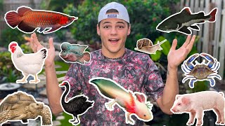 Download ALL My ANIMALS in ONE VIDEO!! Video