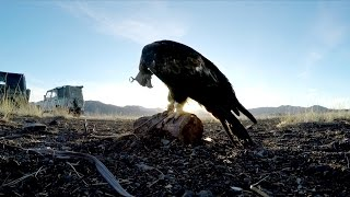 Download GoPro: Eagle Hunters in a New World Trailer Video