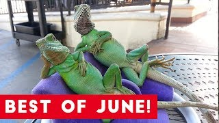 Download Funniest Pet Reactions & Bloopers of June 2017 | Funny Pet Videos Video
