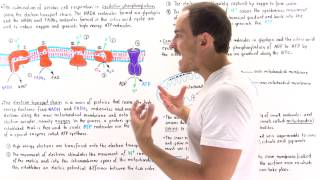 Download Introduction to Oxidative Phosphorylation Video