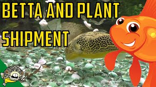 Download Betta and Plant Shipment Daily Dose #9 Video
