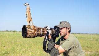Download Meerkats! Video