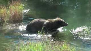 Download Brooks Camp in Katmai National Park Alaska Overview and Brown Bears Video