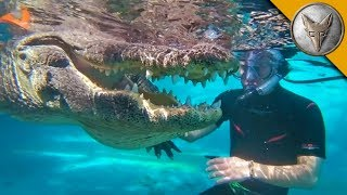 Download JAWS! Swimming with Gators! Video