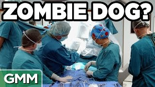Download Real Life Zombie Experiments Video