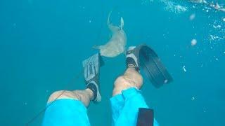 Download *GRAPHIC* SHARK BITES SPEARFISHERMAN IN FLORIDA KEYS Video