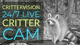 Download CritterVision Critter Cam: 24/7 Live Critter, Nature and Wildlife-Viewing Cam! Video