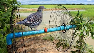 Download Awesome Super Bird Trap Using Fan Guard With PVC - How to make super easy bird trap work 100% Video