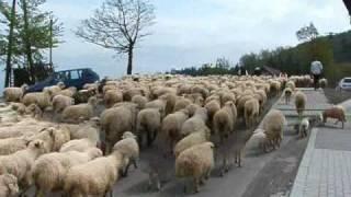 Download Owce wychodzą na hale Koniaków Ochodzita Video