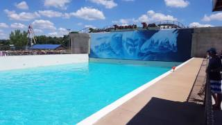 Download Wave pool at Wisconsin dells Video