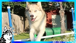 Download DIY DOG AGILITY JUMPS | How to make Agility jumps for under $50 Video