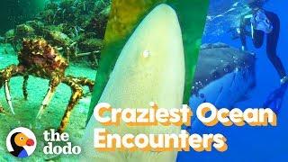 Download Top 5 Craziest Ocean Encounters | The Dodo Video