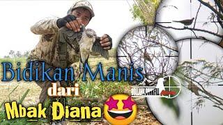 Download Berburu Tekukur#bidikan manis dari Neng Diana Video