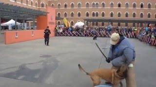Download Polizeihund gegen einen täter mit einem schlagstock Video