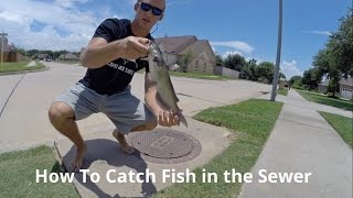 Download How To Catch Fish in the Sewer Video