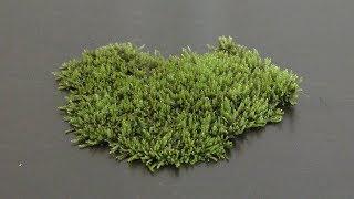 Download Growing Land Moss in Aquarium Video