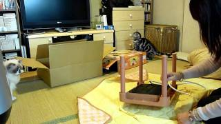 Download 猫用こたつを買ったよ~♪ I bought a KOTATSU for cats Video