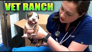 Download Broken Jaw Puppy Rescued Video