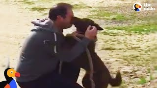 Download Dog Reunited with Owner Slowly Recognizes Dad After Years in Shelter | The Dodo Video