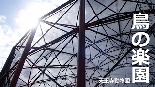 Download 愛の巣がいっぱい 鳥の楽園【天王寺動物園】ワライカワセミの求愛給餌も♡ Video