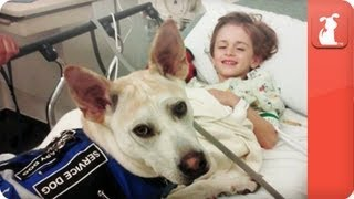 Download Healing Power of Pets - Seizure Detecting Dog assists boy Video