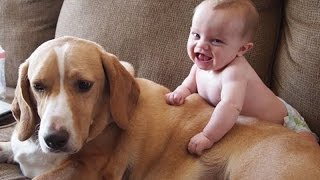 Download Babies annoying dogs – Cute and funny baby & dog compilation Video