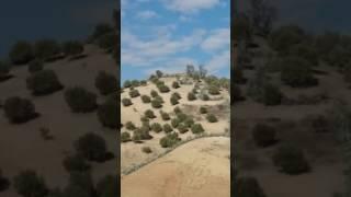 Download عشاق الصيد بالسلوقي في قبيلة أولاد جامع Video