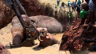 Download An Elephant Entrapped in well with mud Video