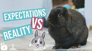 Download Expectations VS Reality BUNNY EDITION Video