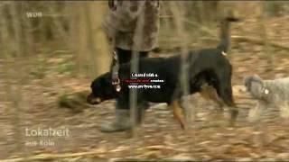 Download Lokalzeit aus Köln Kampfhund als Retter - Frau vorm Erfrieren bewahrt Video