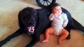 Download 3 month old baby with 3 year old Labrador retriever Video