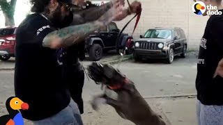 Download ″Aggressive″ Pit Bull Becomes The Biggest Love Bug | The Dodo Video