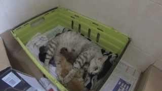 Download Street Cat A Hero, Adopts 3 Abandoned Kittens - Meet Echo A Malaysian Hero Video