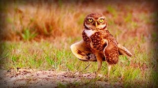 Download Brazil: Protected Nature (full documentary) Video