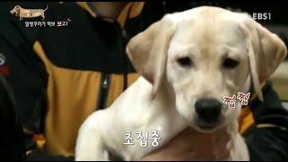 Download EBS 스페셜 프로젝트 - 세상에 나쁜 개는 없다 1부-말썽꾸러기 먹보 보리 / 서산의 작은 폭군 봉구 #001 Video
