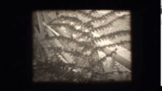 Download Super 8 negative and reversal processing - Rochester Square ReCreation 24-6-17 Video