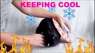 Download HOW TO KEEP YOUR RABBITS COOL IN THE SUMMER Video